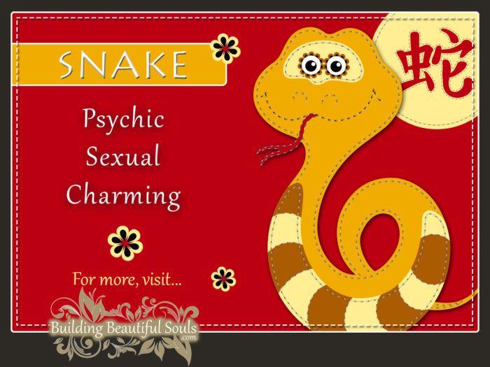 Chinese Zodiac Snake - Year of the Snake - Chinese New Year Animals 1290x960