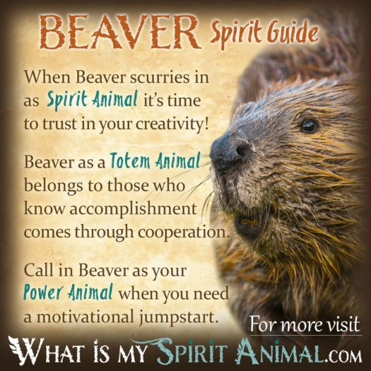 Beaver Spirit Totem Power Animal Symbolism Meaning 1200x1200