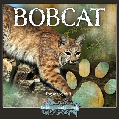 Bobcat Animal Tracks Footprint Identification 400x400