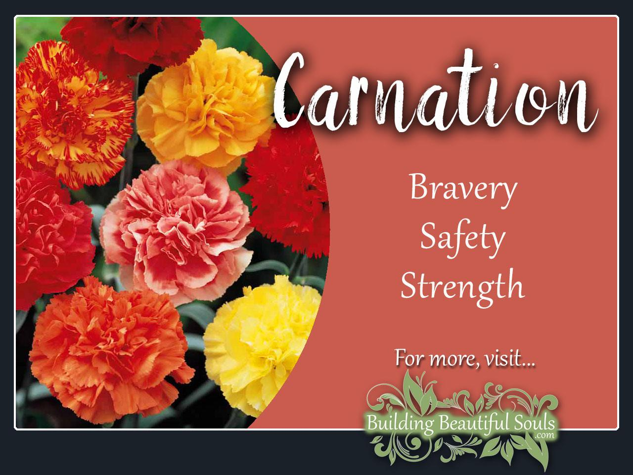 Carnation Meaning Symbolism January Birth Flower Flower Meanings
