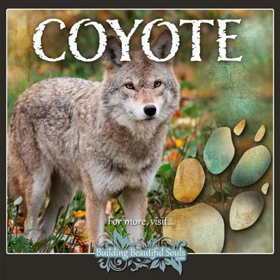 Coyote Animal Tracks Footprint Identification Symbolic Meaning 400x400