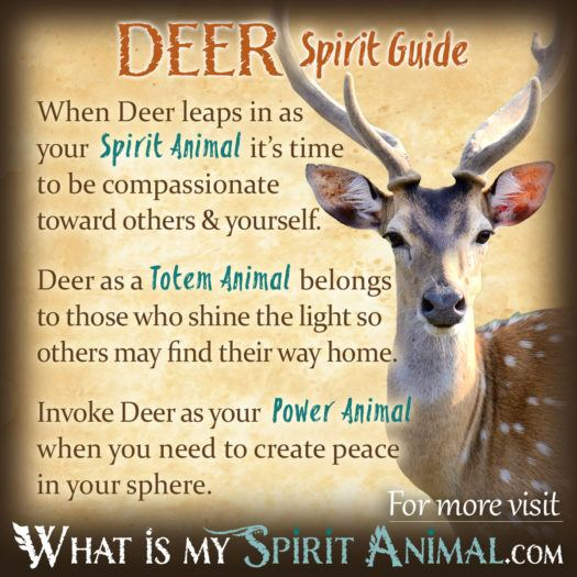 Deer Spirit Totem Power Animal Symbolism Meaning 1200x1200