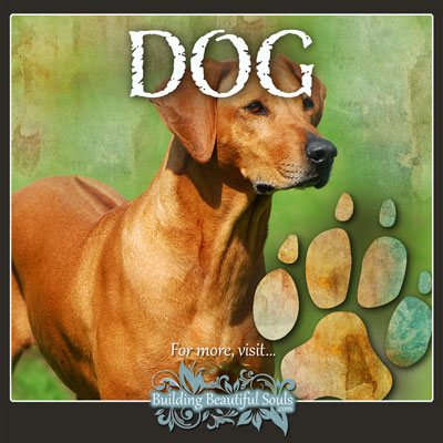 Dog Animal Tracks Footprint Identification 400x400