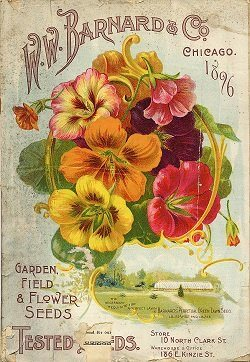 Flower Meanings Vintage Seeds Package Barnards Flowers 250x262