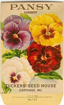 Flowers Symbolic Meaning Vintage Pansy Seed Packet 225x369