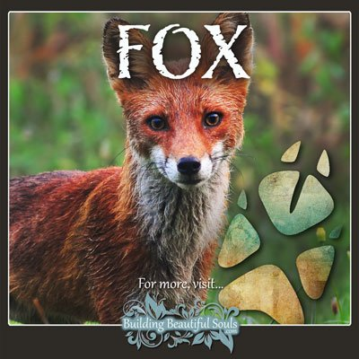 Fox Animal Tracks Footprint Identification 400x400