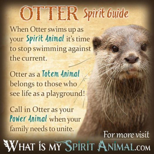 Native American Animal Symbols Meanings| Animal Symbolism