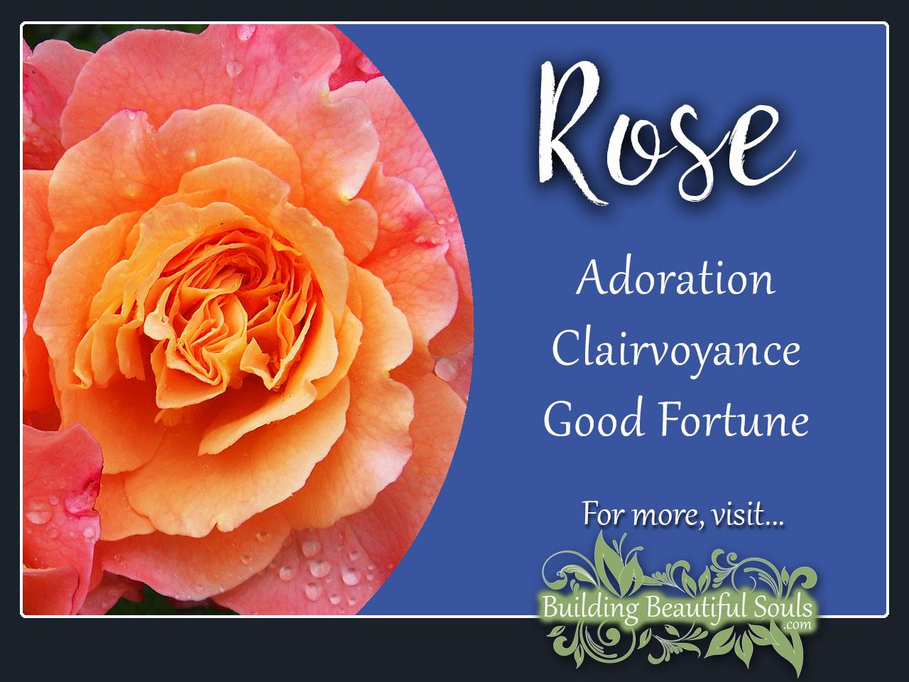 Rose Meaning Symbolism June Birth Flower Flower Meanings