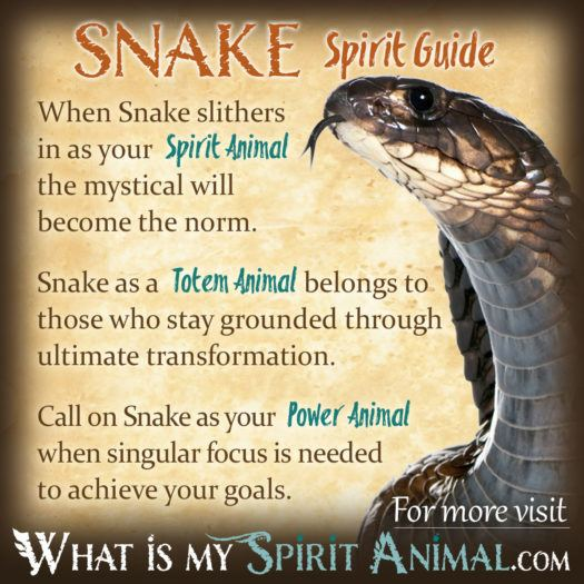 Snake Spirit Totem Power Animal Symbolism Meaning 1200x1200