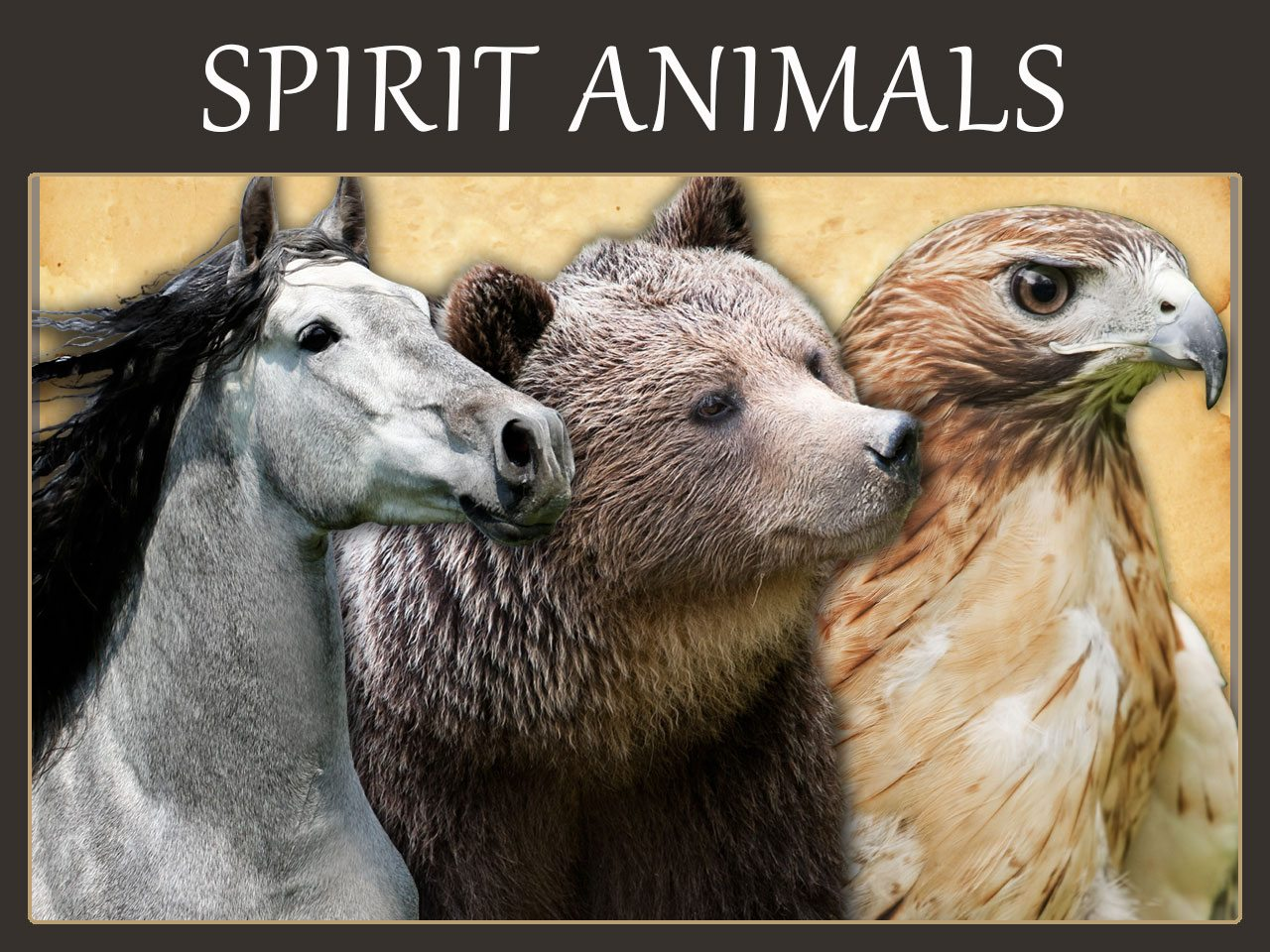 All About Robin Spirit Animal Symbolism And Meaning Kidskunstfo