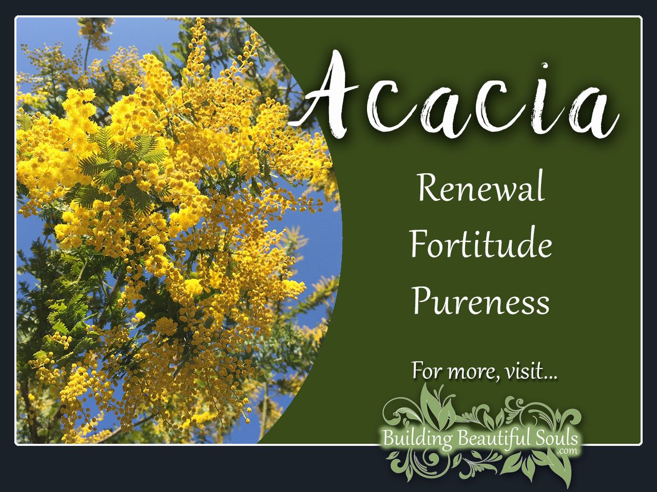 Flower meanings birth flowers the language of flowers floriography acacia flower meanings izmirmasajfo