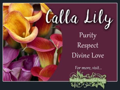 Calla Lily Meaning Symbolism Flower Meanings 1280x960