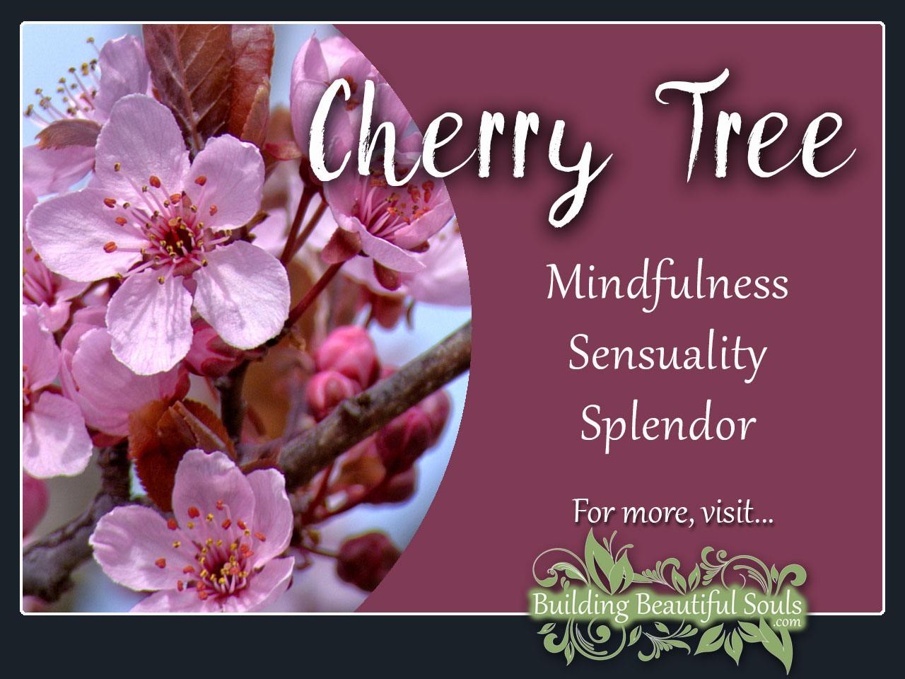 Cherry tree meaning symbolism tree symbolism meanings cherry tree meaning symbolism izmirmasajfo