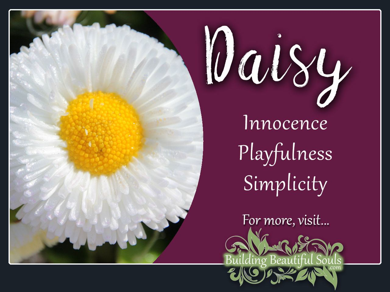Daisy meaning symbolism flower meanings symboiism daisy meaning symbolism izmirmasajfo
