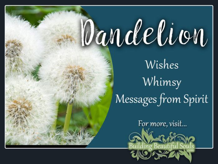 Dandelion Meaning Symbolism Flower Meanings 1280x960