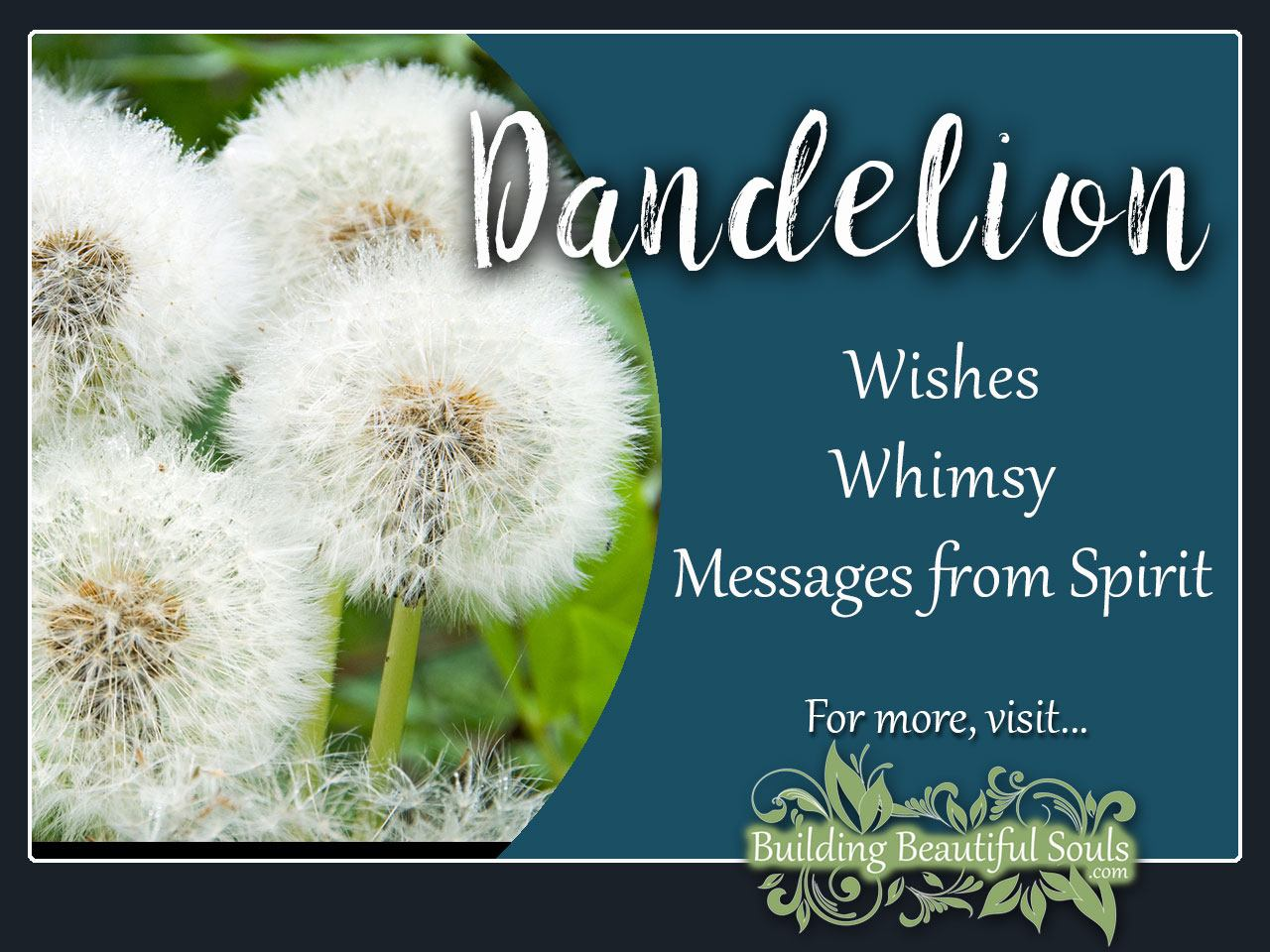 dandelion meaning  symbolism  flower meanings, Natural flower