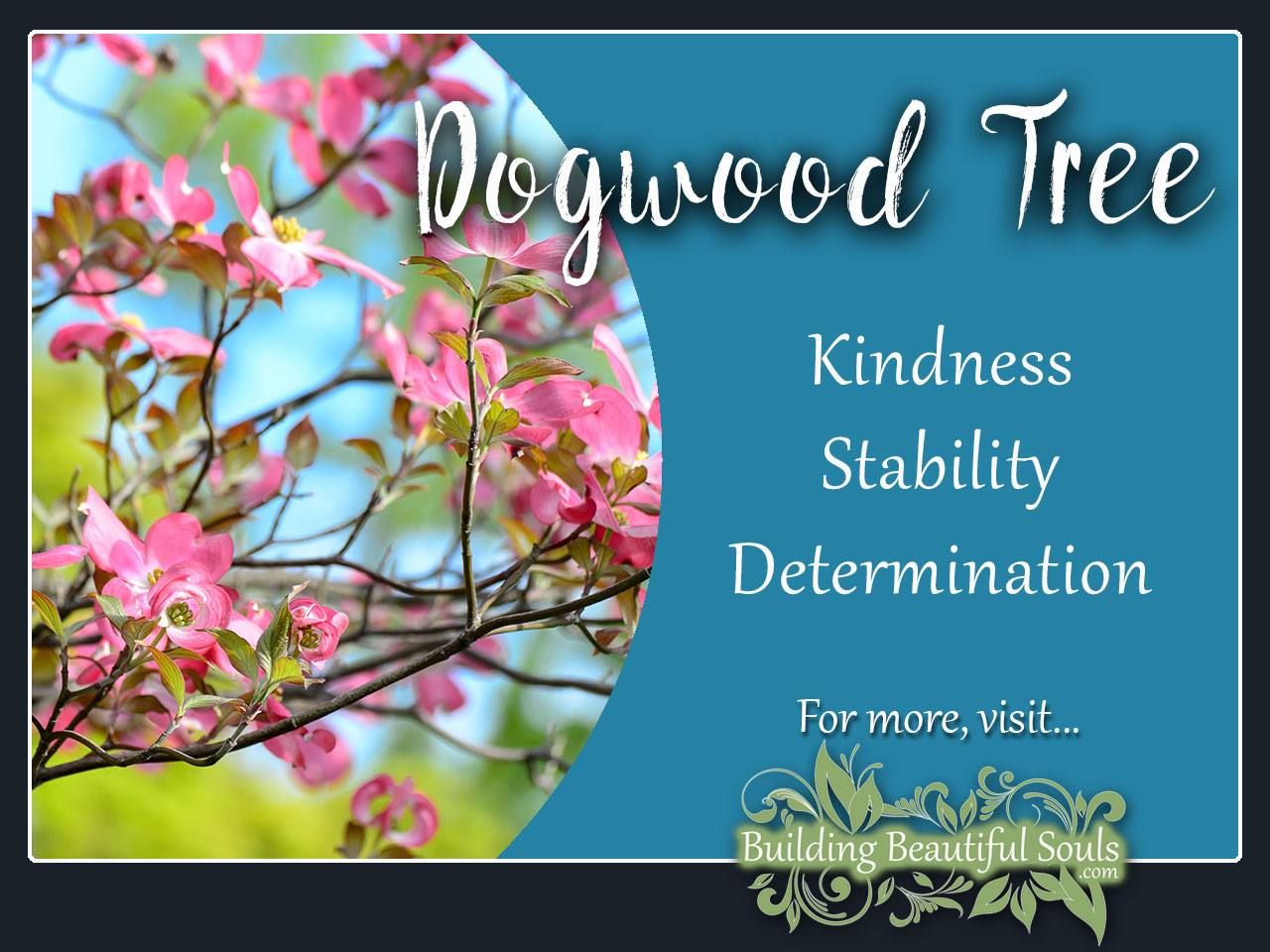 Dogwood Tree Meaning Symbolism Tree Symbolism Meanings