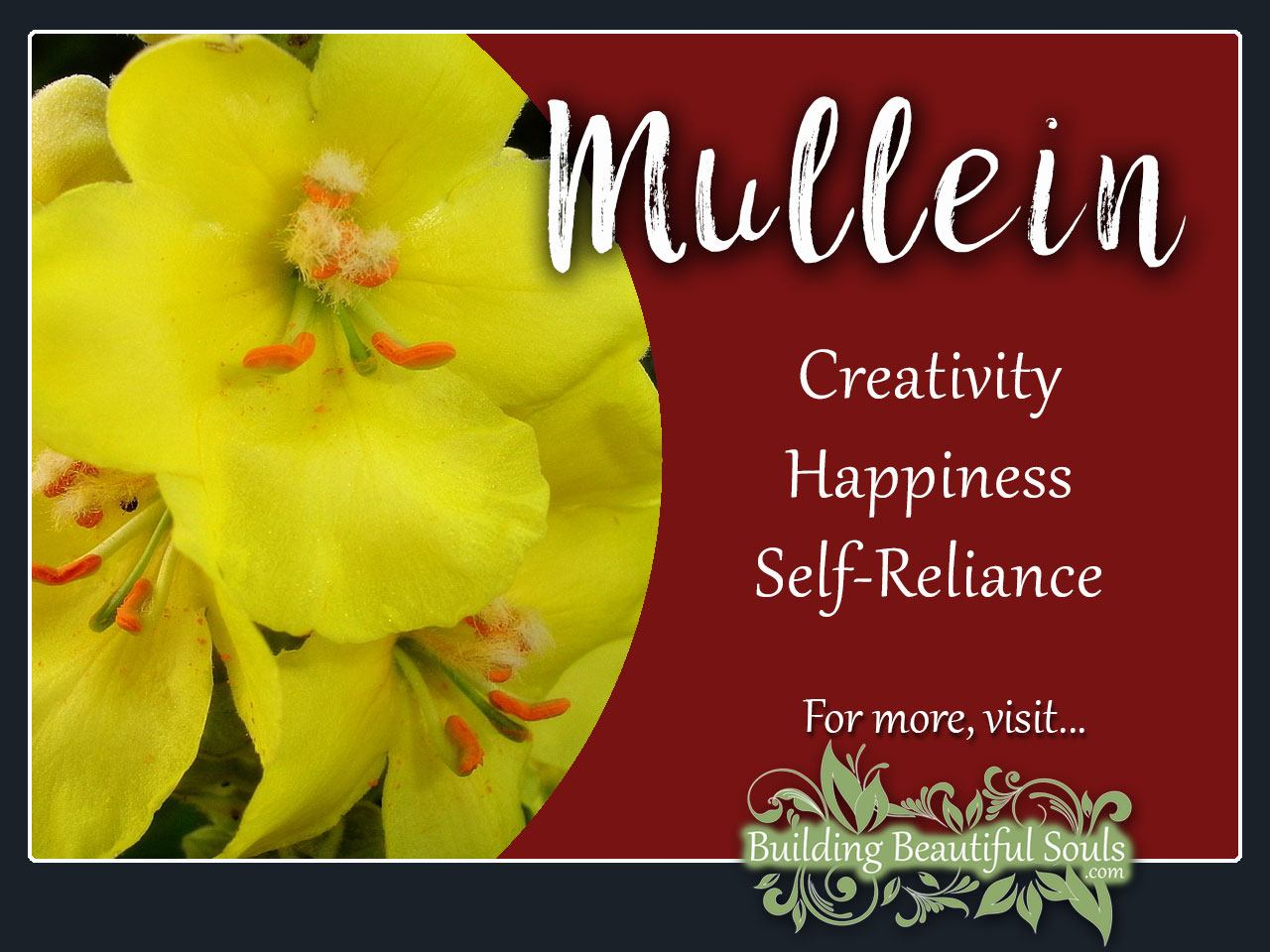 Mullein Meaning Symbolism Flower Meanings 1280x960