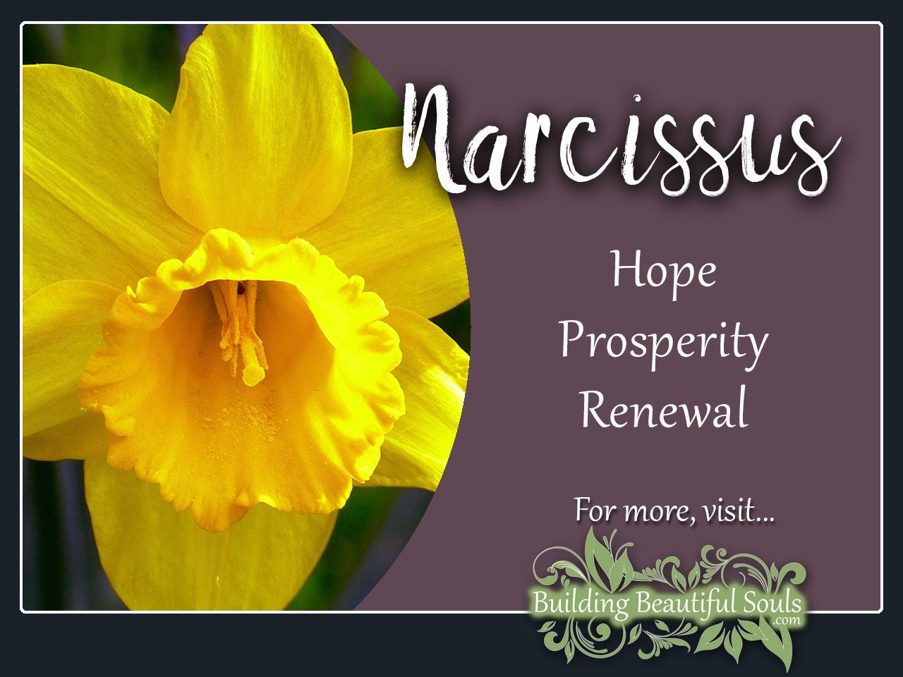 Narcissus Meaning & Symbolism | Flower Meanings