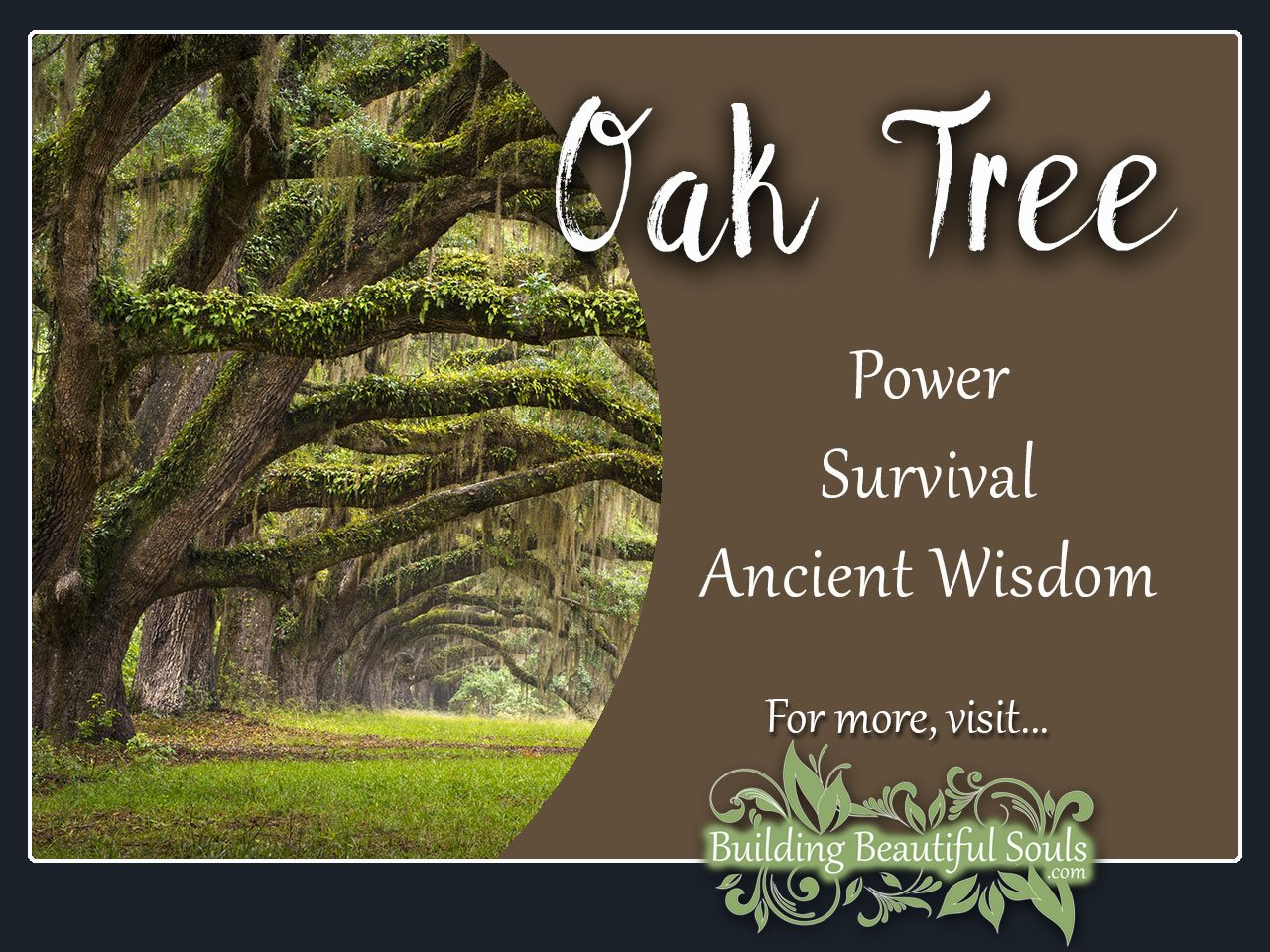 Oak Tree Meaning Symbolism Tree Symbolism Meanings