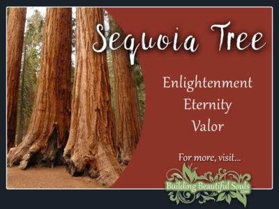 Sequoia Tree Meaning Symbolism Flower Meanings 1280x960