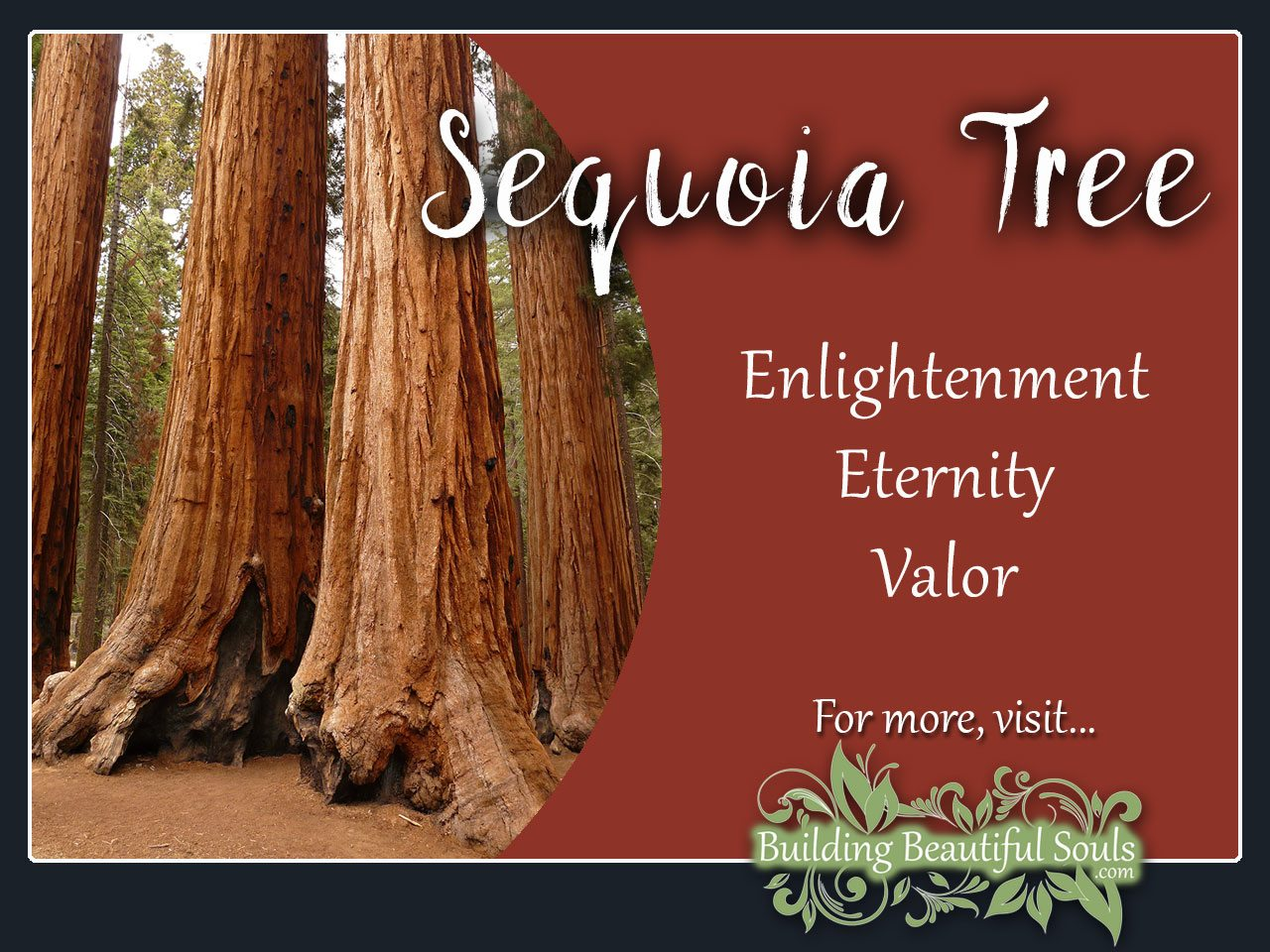 Sequoia Tree Meaning Symbolism Tree Symbolism Meanings