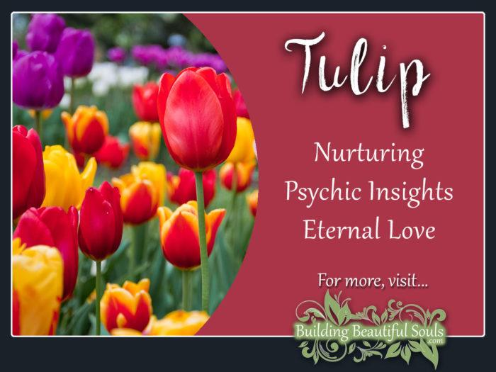 Tulip Meaning Symbolism Flower Meanings 1280x960