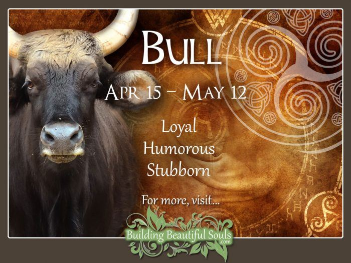 Bull Celtic Zodiac Animal Meanings, Traits, & Personality 1280x960