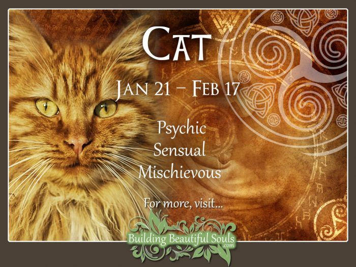 Cat Celtic Zodiac Animal Meanings, Traits, & Personality 1280x960