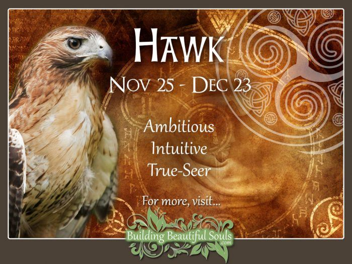 Hawk Celtic Zodiac Animal Meanings, Traits, & Personality 1280x960