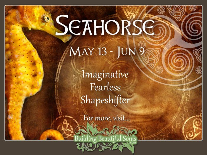 Seahorse Celtic Zodiac Animal Meanings, Traits, & Personality 1280x960