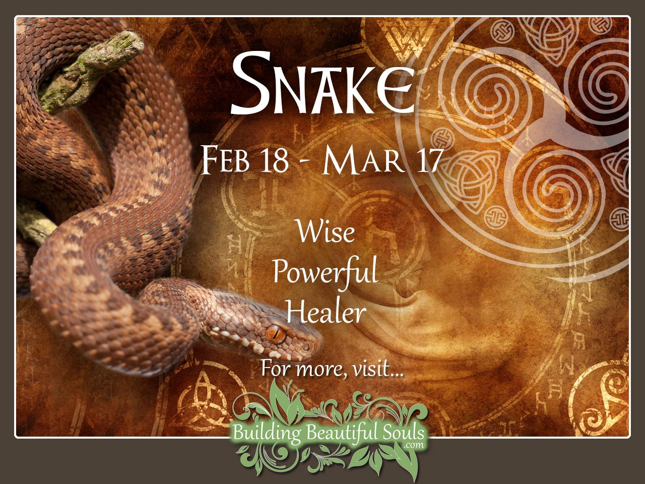 Snake (Adder) Celtic Zodiac Animal Meanings, Traits, & Personality 1280x960