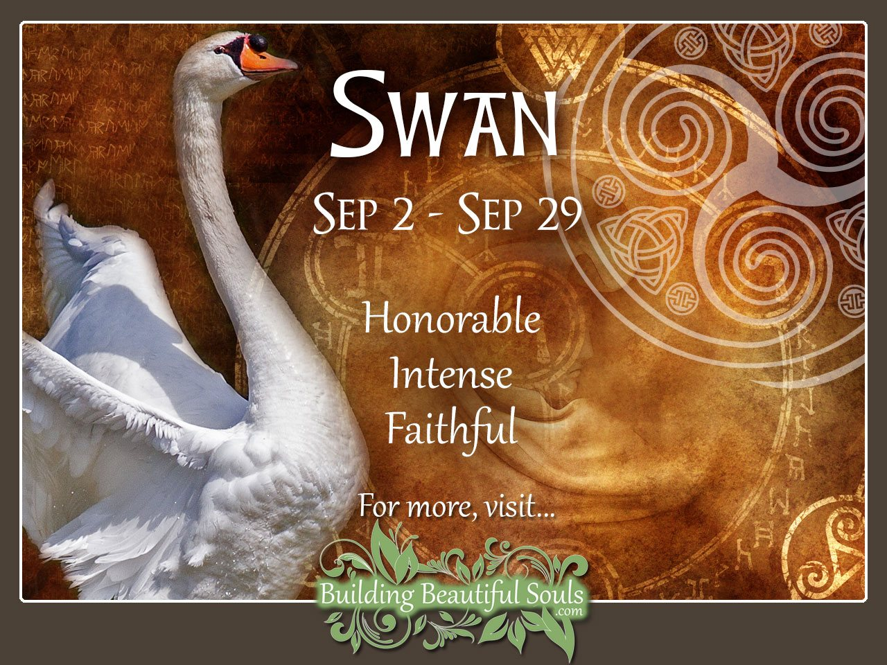 Swan Celtic Zodiac Animal Meanings, Traits, & Personality 1280x960