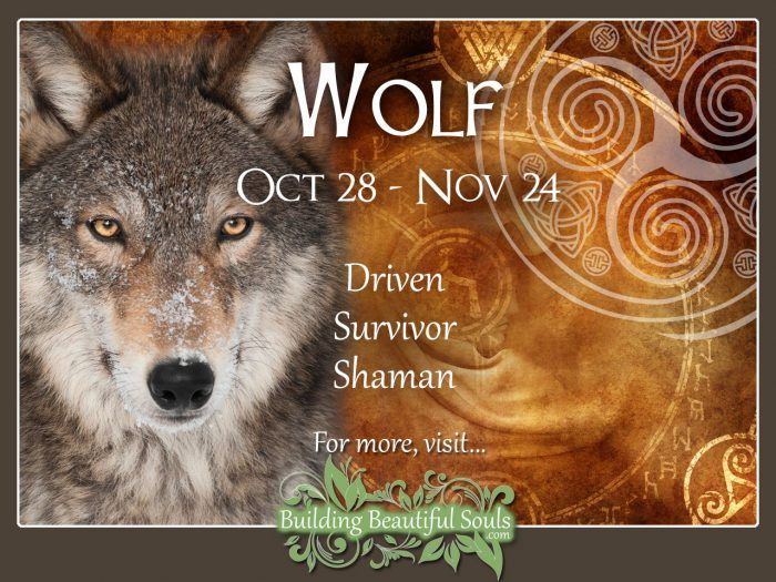 Wolf Celtic Zodiac Animal Meanings, Traits, & Personality 1280x960