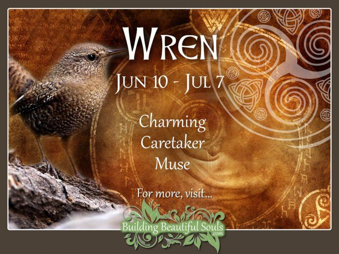 Wren Celtic Zodiac Animal Meanings, Traits, & Personality 1280x960