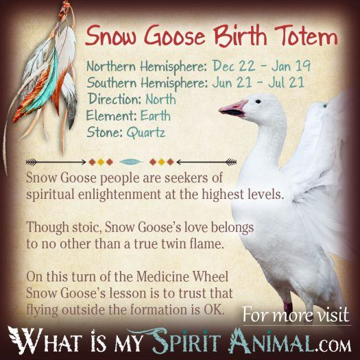 Native American Zodiac Snow Goose Birth Totem width=