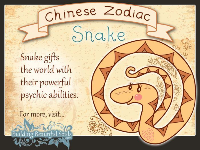 Year of the Snake in Chinese Zodiac for Kids 1280x960