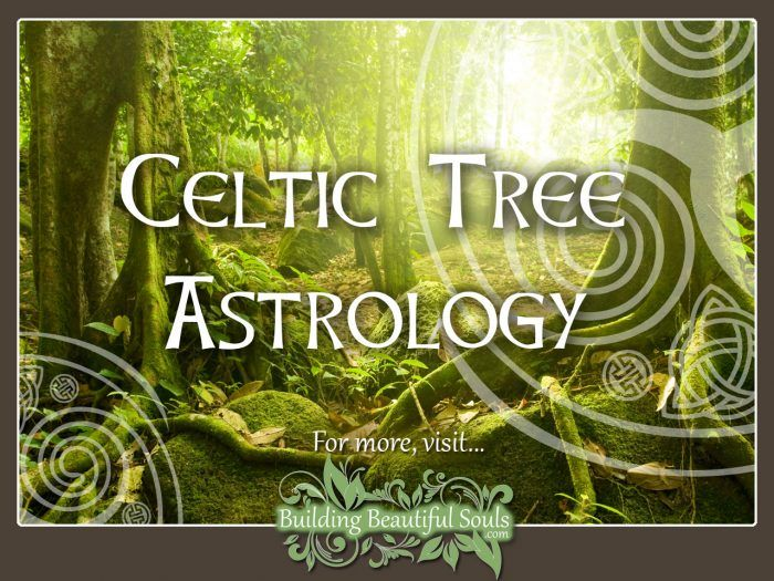 Celtic Tree Astrology & Zodiac 1280x960