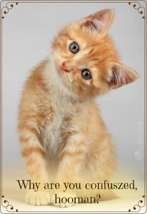 Animal Communication & Psychic Abilities 500x725