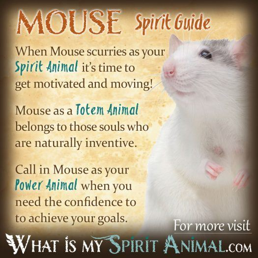 Mouse Spirit, Totem, & Power Animal 1200x1200