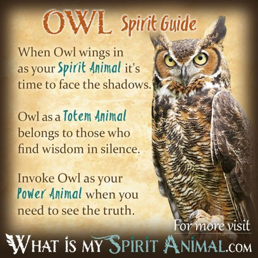 Owl Spirit, Totem, & Power Animal 1200x1200