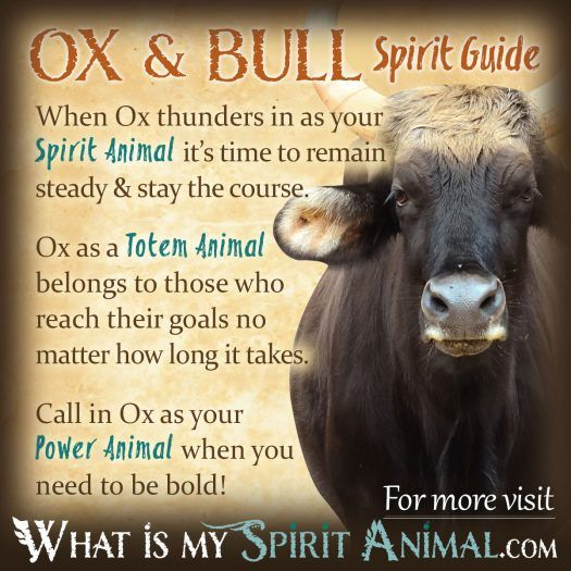 Ox & Bull Spirit, Totem, & Power Animal 1200x1200