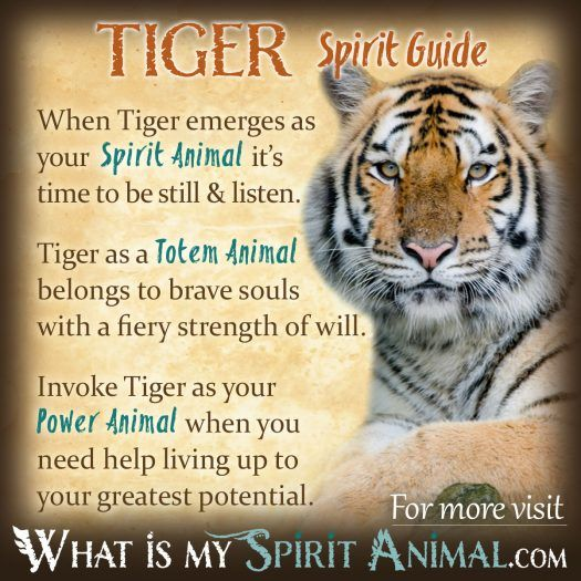 Tiger Spirit, Totem, & Power Animal 1200x1200