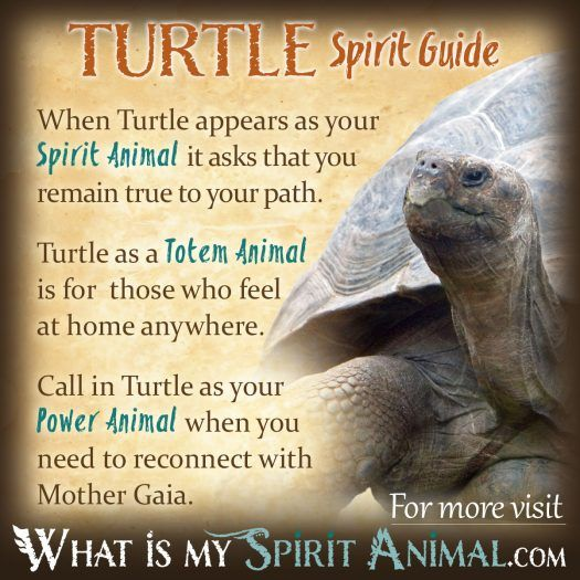Turtle Spirit, Totem, & Power Animal 1200x1200
