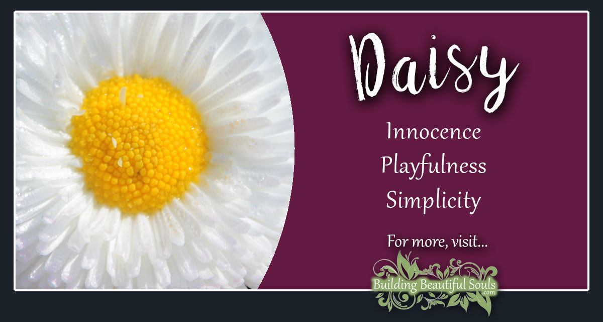 Daisy Meaning & Symbolism | Flower Meanings & Symboiism