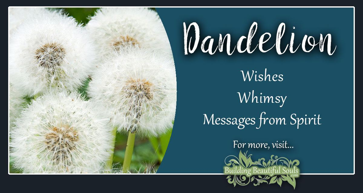 Dandelion Meaning Symbolism Flower Meanings
