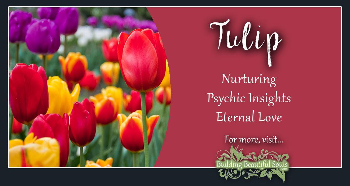 Tulip Meaning Symbolism Flower Meanings Symbolism