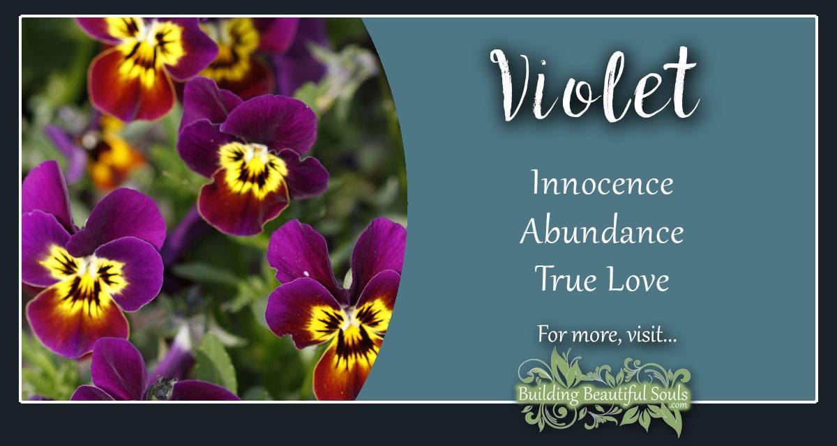 Violet Meaning Symbolism Flower Meanings Symbolism